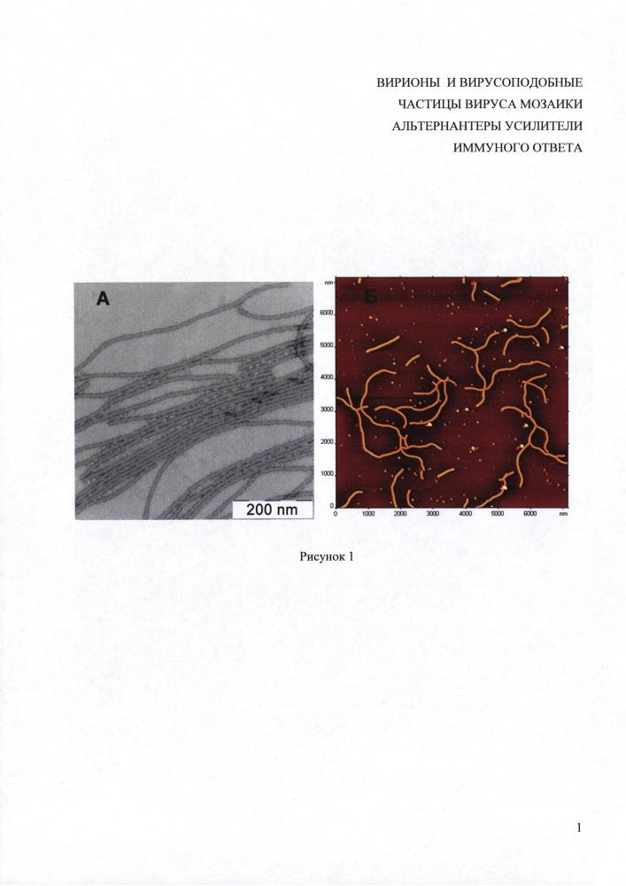 Вирионы и вирусоподобные частицы вируса мозаики альтернантеры как усилители иммунного ответа