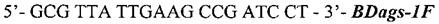 Набор олигонуклеотидных праймеров и флуоресцентно-меченого зонда для идентификации возбудителя бластомикоза blastomyces dermatitidis