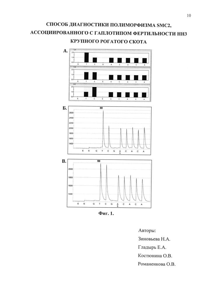 Способ диагностики полиморфизма smc2, ассоциированного с гаплотипом фертильности нн3 крупного рогатого скота