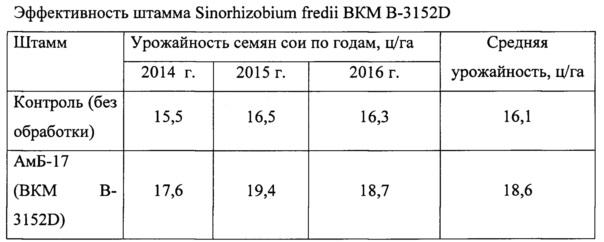 Штамм клубеньковых бактерий sinorhizobium fredii для изготовления бактериального удобрения под сою