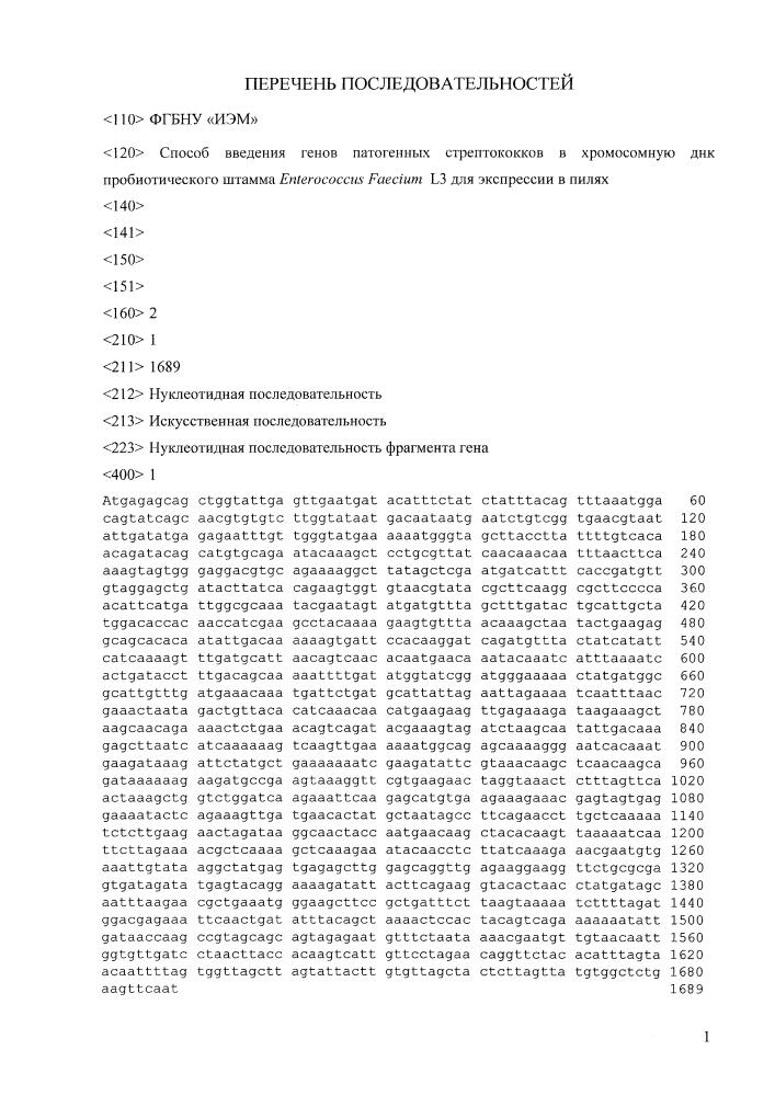 Способ введения генов патогенных стрептококков в хромосомную днк пробиотического штамма enterococcus faecium l3 для экспрессии в пилях