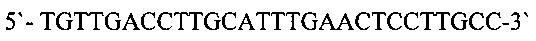 Антитело мат40, которое связывается с доменом i экстраклеточной части рецептора эпидермального фактора роста her2/cd340, и его применение для лечения рака