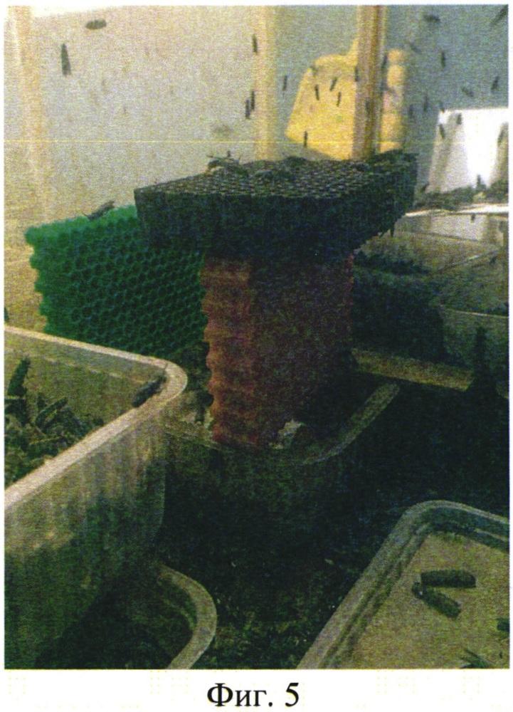 Способ увеличения количества кладок мухи чёрная львинка