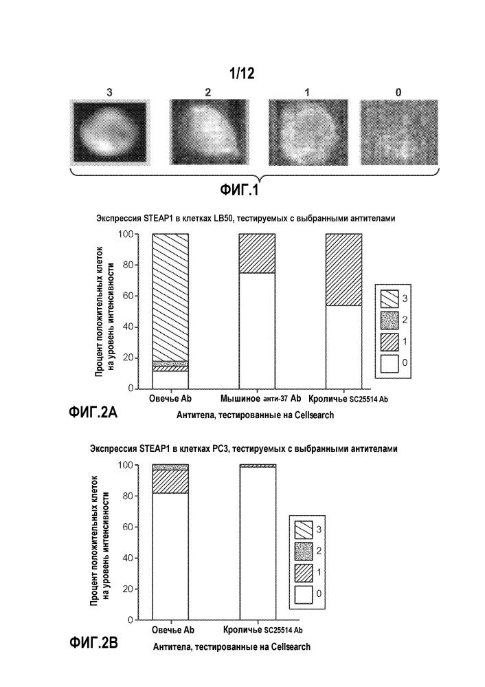 Композиции и способы анализа рака предстательной железы
