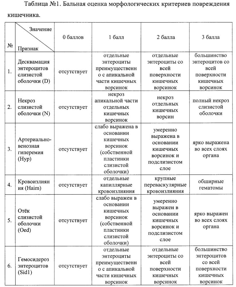 Способ морфологической оценки влияния различных лекарственных форм железа для энтерального применения на тонкий отдел кишечника у экспериментальных животных