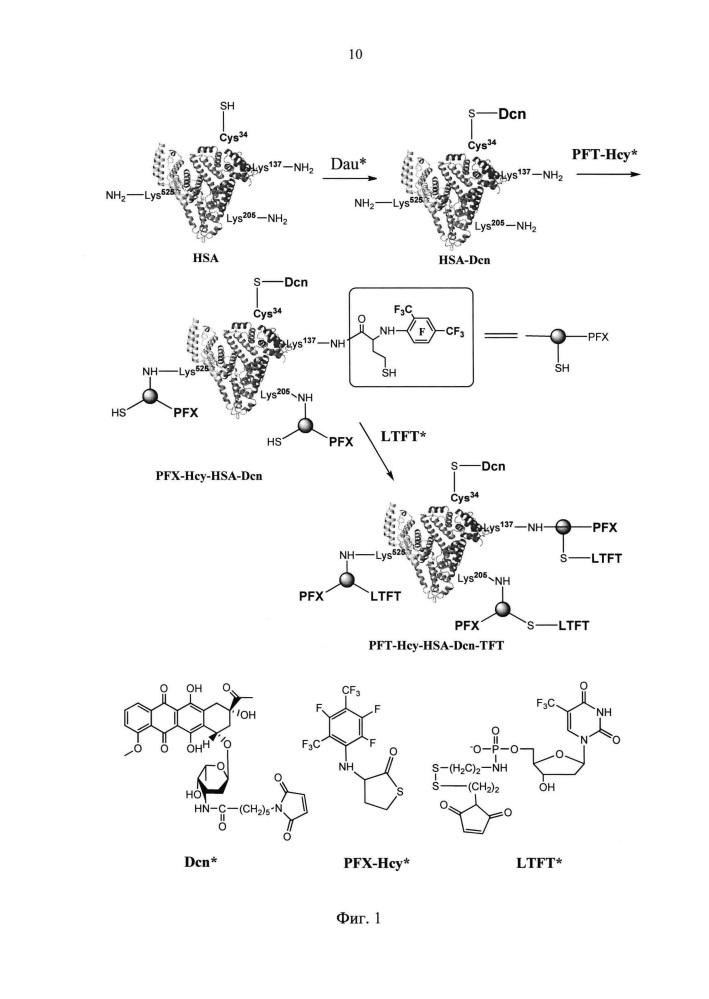 Способ получения противоопухолевого коньюгата на основе человеческого сывороточного альбумина, содержащего терапевтические и контрастирующий агенты