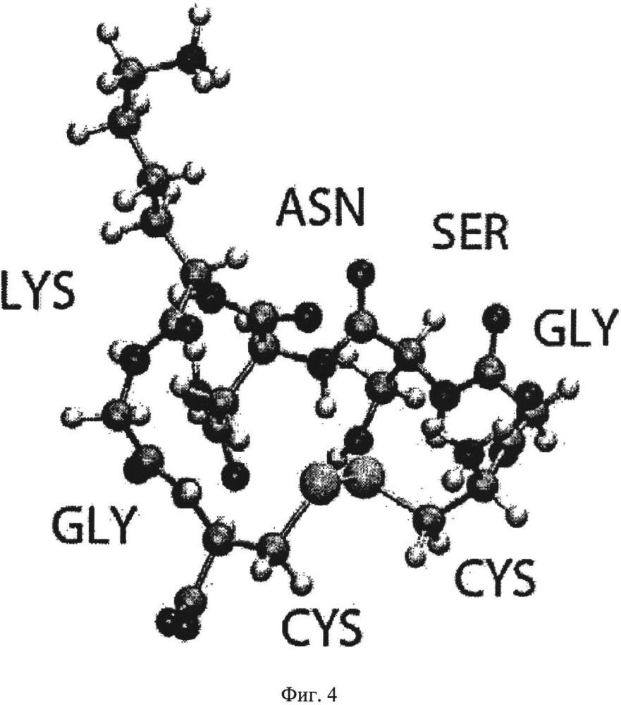 Эпитоп, специфичный к олигомеру амилоида бета, и антитела
