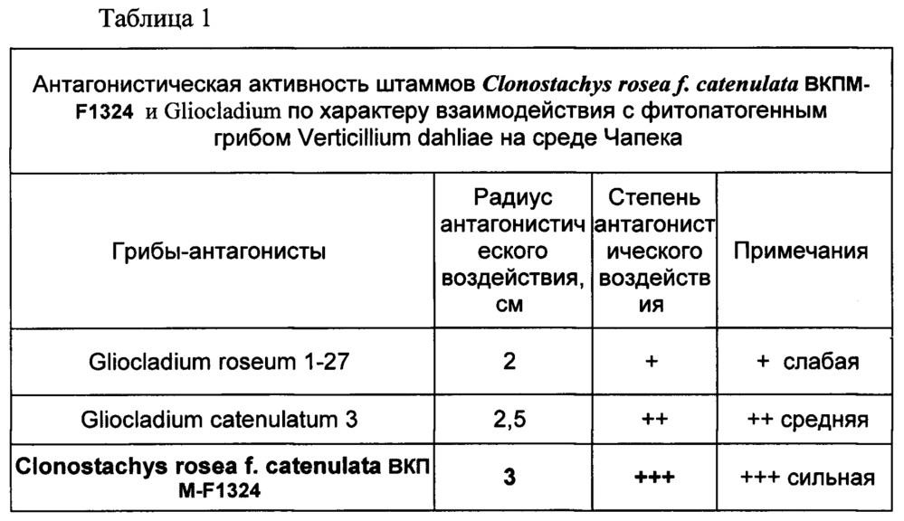 Штамм микроорганизма clonostachys rosea f. catenulata в качестве биофунгицида, стимулятора роста растений и продуцента метаболитов для сельскохозяйственного применения