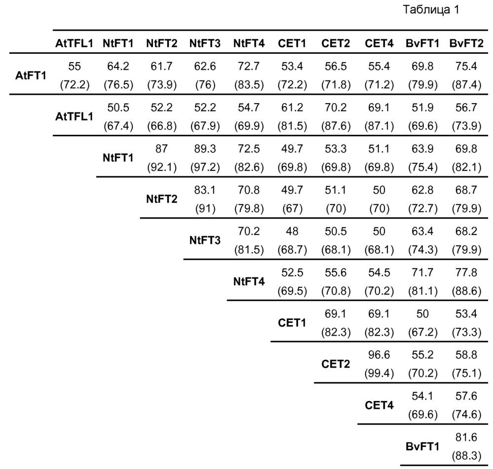 Последовательности нуклеиновых кислот и пептиды/белки семейства ft, обусловливающие свойства подавления цветения у трансформированных ими растений табака и трансгенных растений