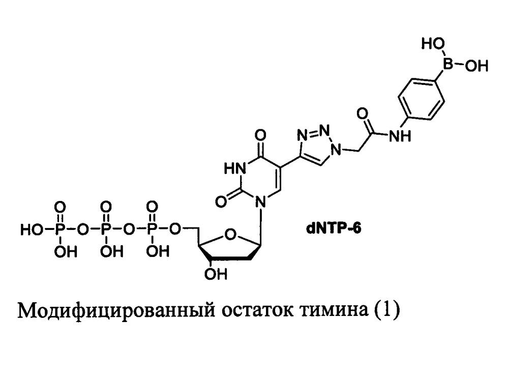 Аптамеры, специфичные к внеклеточному гликозилированному домену человеческого рецептора cd47