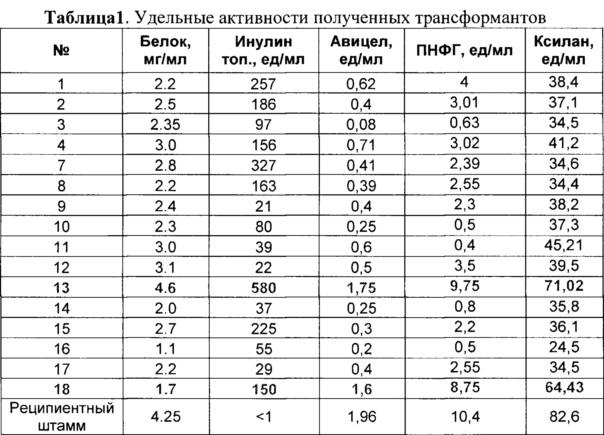 Рекомбинантный штамм мицелиального гриба penicillium verruculosum ( варианты) и способ получения ферментного препарата с его использованием (варианты)
