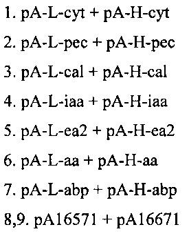 Способ получения антитела, специфически связывающего домен димеризации экзоклеточной части онкобелка her2/neu, в растении, антитело, полученное этим способом, и его применение