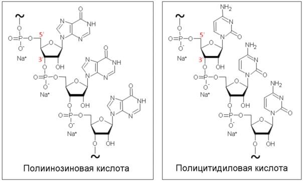 Составы на основе полиинозиновой-полицитидиловой кислоты (poly(i:с)) для лечения инфекций верхних дыхательных путей