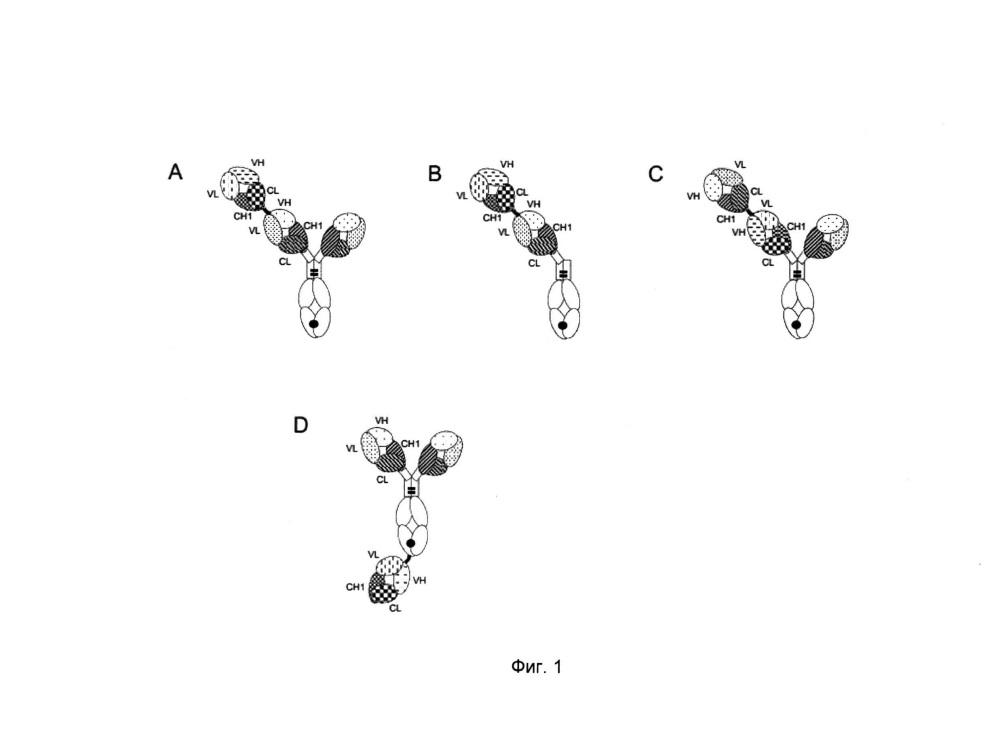 Биспецифические антигенсвязывающие молекулы