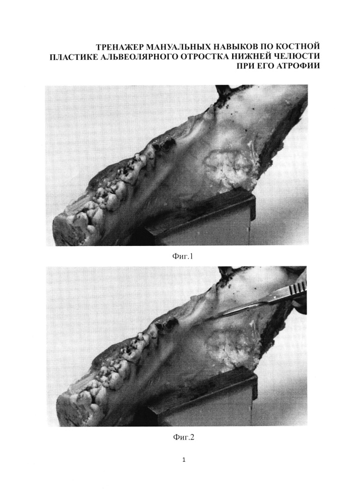 Применение нижней челюсти свиньи в качестве имитатора нижней челюсти человека
