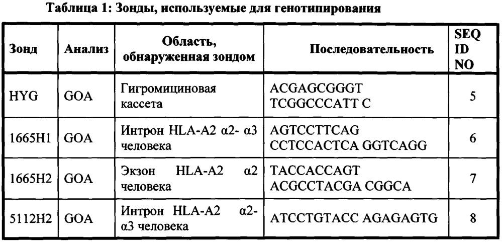 Генетически модифицированные в отношении главного комплекса гистосовместимости мыши