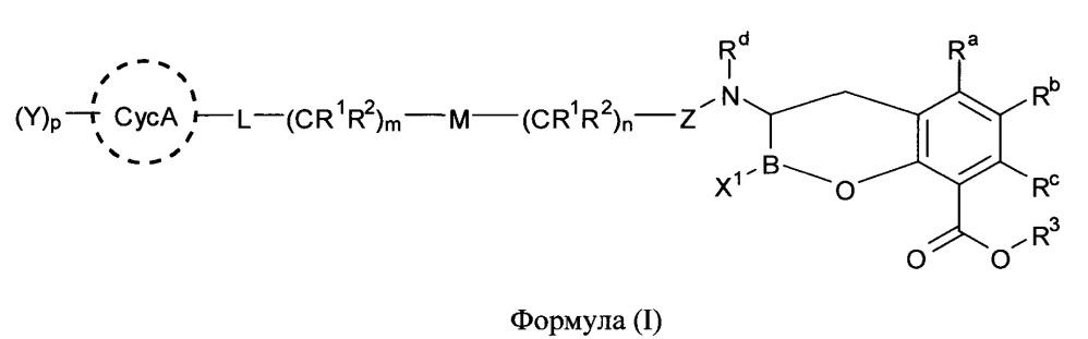 Ингибиторы бета-лактамаз