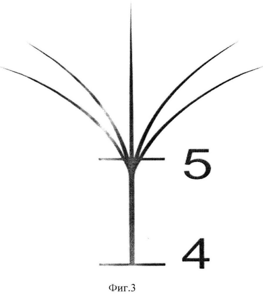 Способ объемного наращивания естественных ресниц искусственными ресницами посредством формирования пучка