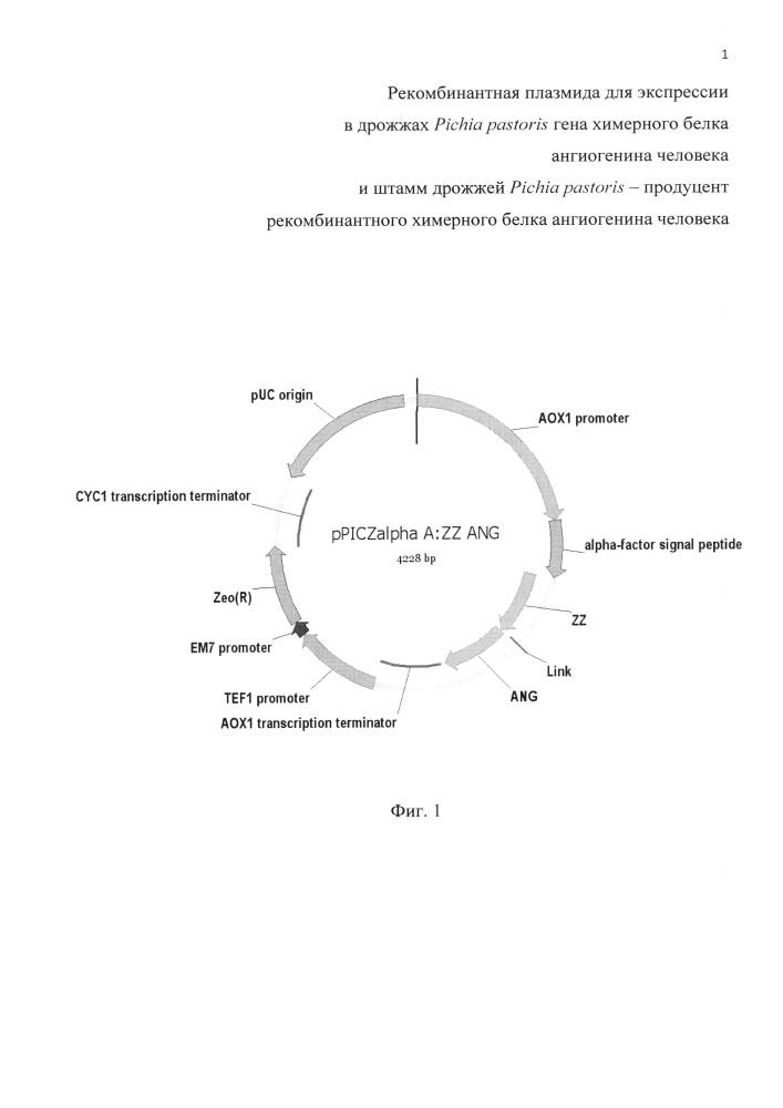 Рекомбинантная плазмида для экспрессии в дрожжах pichia pastoris гена химерного белка ангиогенина человека и штамм дрожжей pichia pastoris - продуцент рекомбинантного химерного белка ангиогенина человека