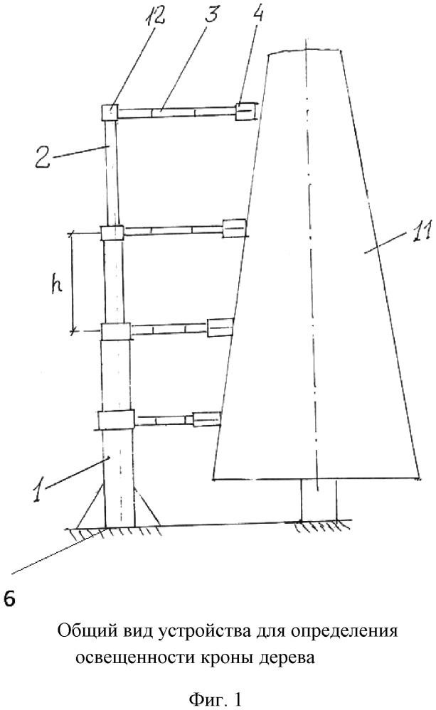 Устройство для определения освещенности кроны дерева
