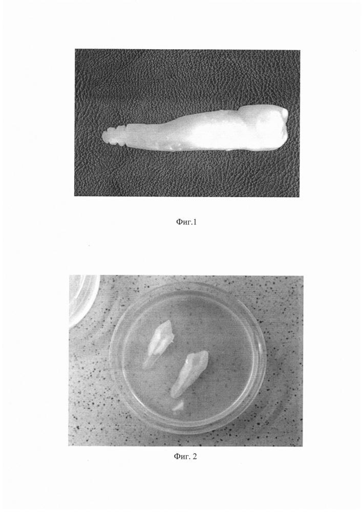 Способ формирования смешанной биопленки пародонтопатогенных анаэробных бактерий in vitro