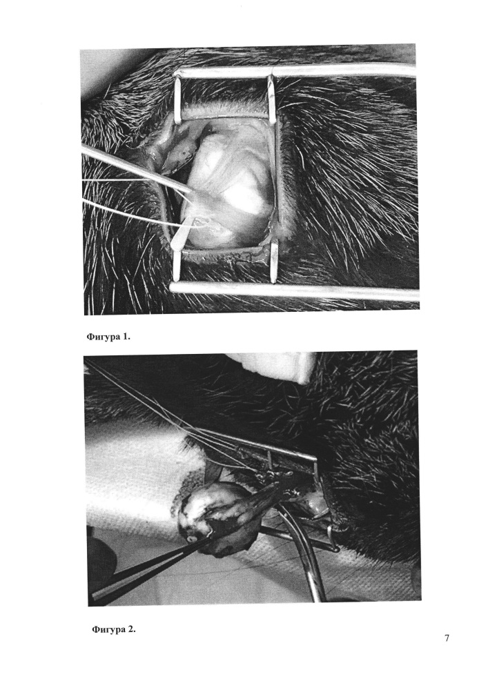 Способ формирования опорно-двигательной культи после энуклеации у кролика