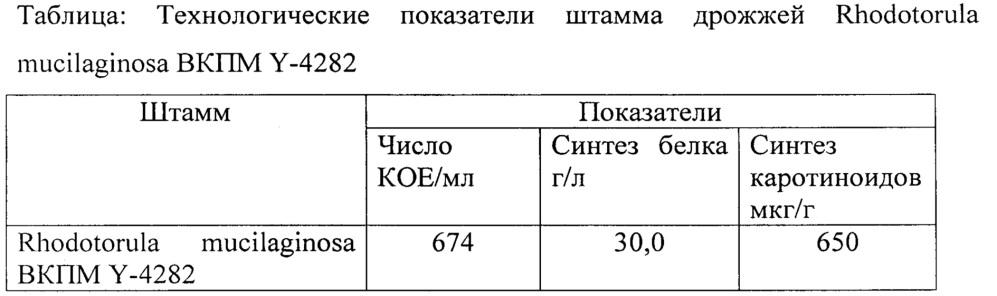 Штамм дрожжей rhodotorula mucilaginosa вкпм y-4282- продуцент каротиноидов