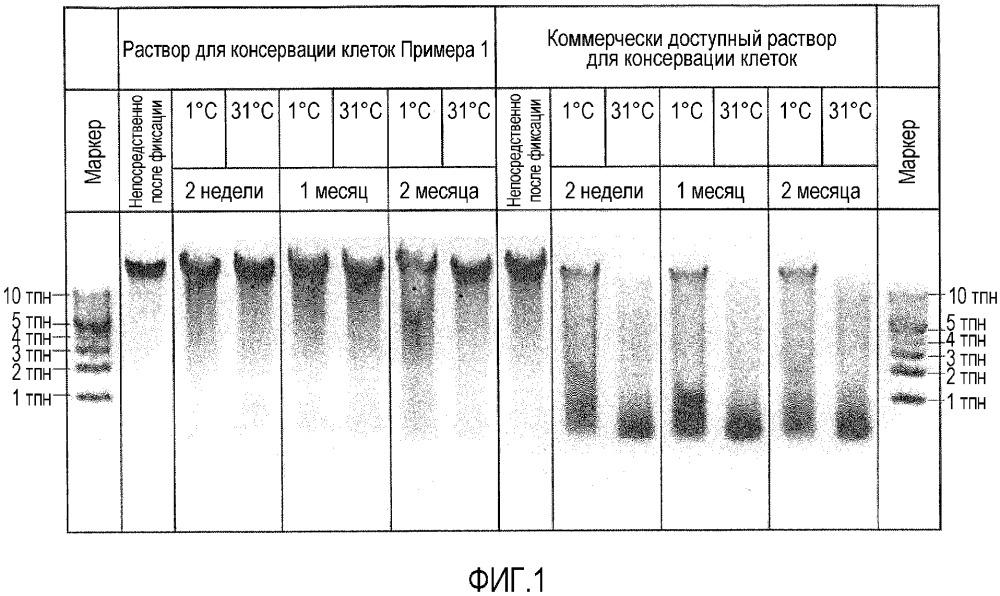 Раствор для консервации клеток, его применение и способ получения раствора для консервации клеток