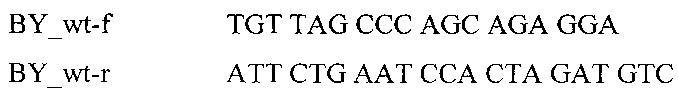 Способ генодиагностики мутантного аллеля, вызывающего короткий позвоночник или брахиспину у крупного рогатого скота, и тест-система для его осуществления