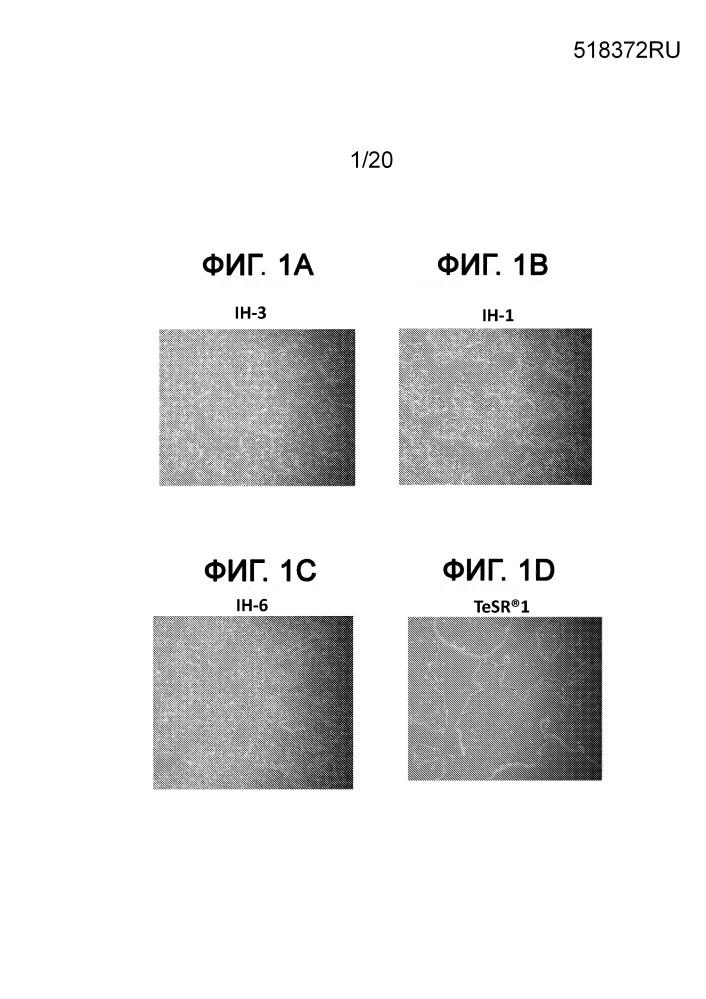 Среда определенного состава для размножения и обновления плюрипотентных стволовых клеток