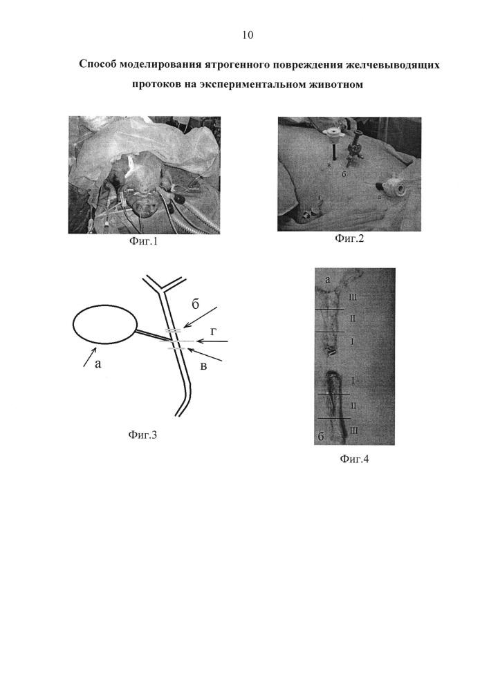Способ моделирования ятрогенного повреждения желчевыводящих протоков на экспериментальном животном