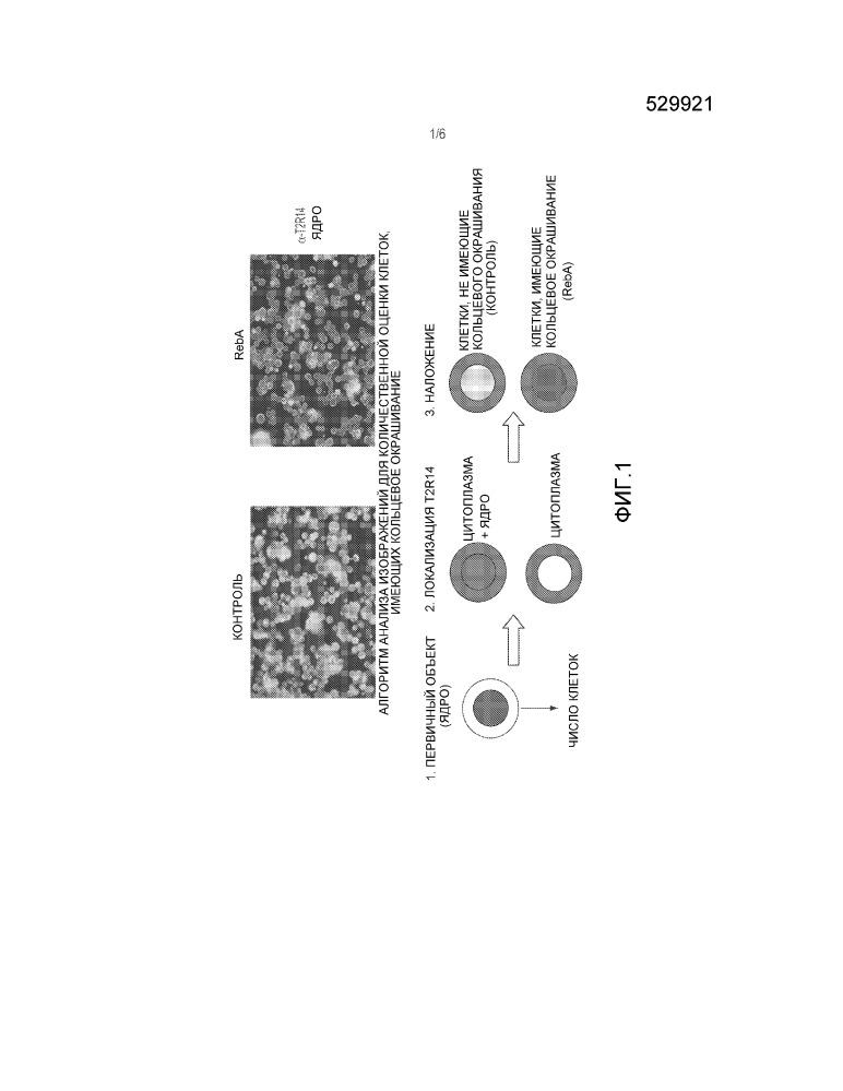 Метод анализа интернализации вкусовых рецепторов
