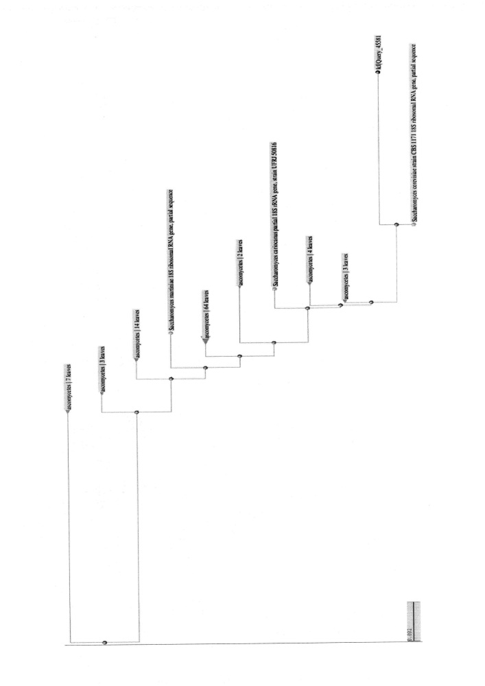 Штамм saccharomyces cerevisiae - продуцент этанола