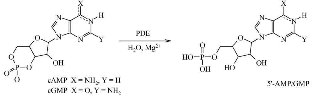 Ингибиторы фермента фосфодиэстеразы 10