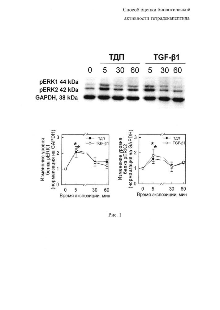 Способ оценки биологической активности тетрадекапептида