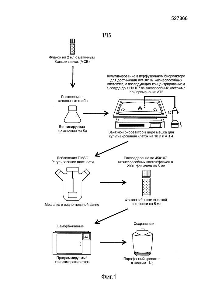 Способы формирования банка клеток высокой плотности (варианты)