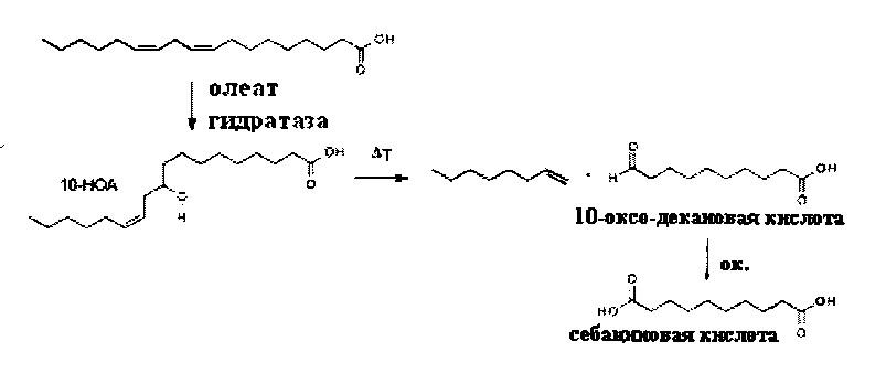 Способ получения себациновой кислоты