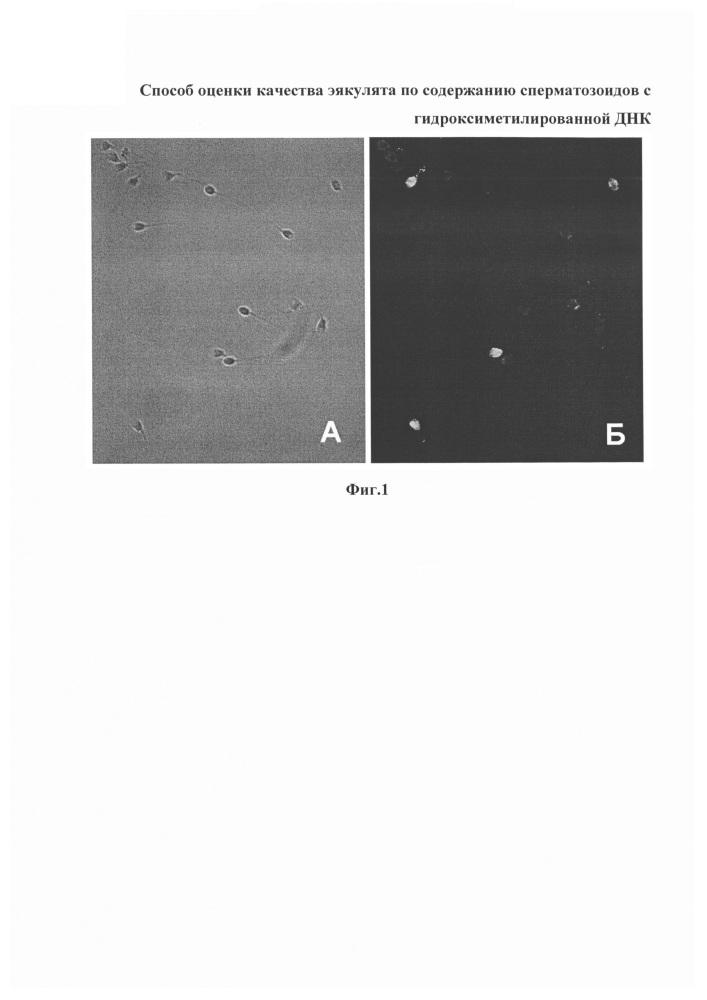 Способ оценки качества эякулята по содержанию сперматозоидов с гидроксиметилированной днк