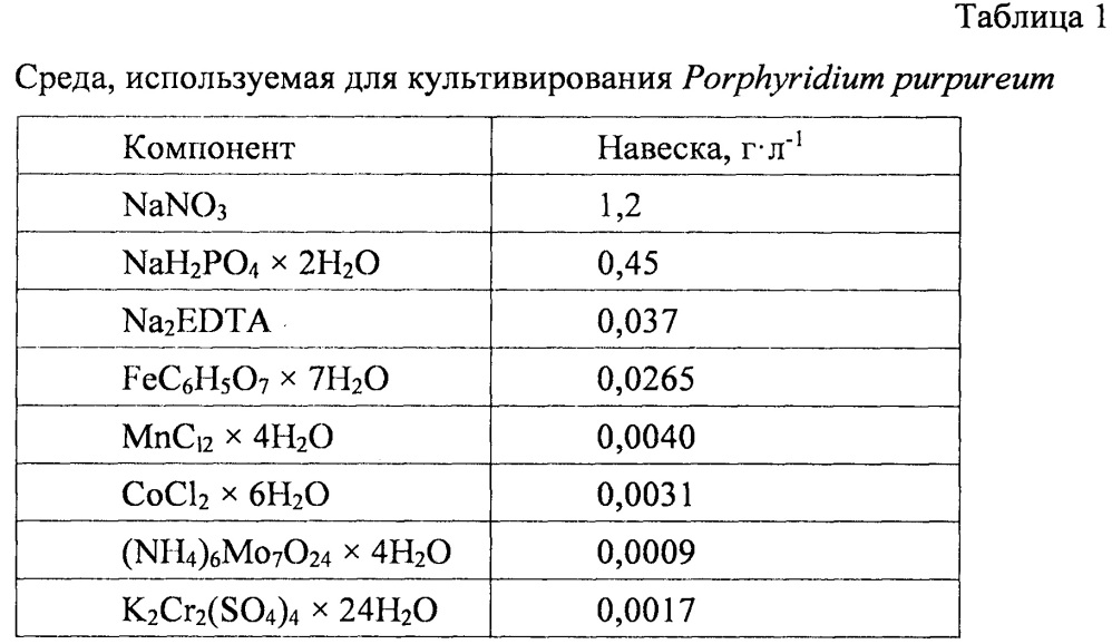 Способ выращивания микроводоросли porphyridium purpureum