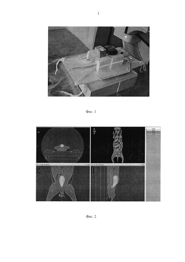 Способ моделирования лучевого цистита