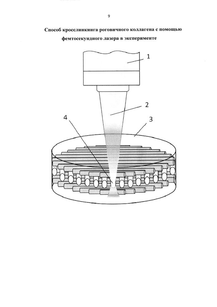 Способ кросслинкинга роговичного коллагена с помощью фемтосекундного лазера в эксперименте