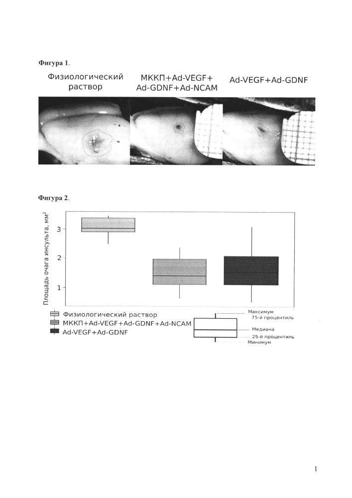 Средство для сдерживания гибели нейронов при ишемическом инсульте головного мозга и способ клеточно-опосредованной генной терапии ишемического инсульта головного мозга средством сдерживания гибели нейронов при ишемическом инсульте головного мозга