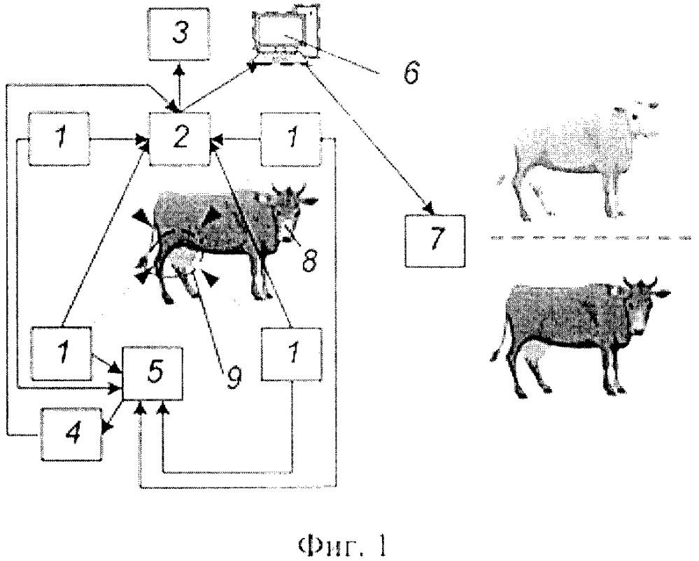 Способ и устройство дистанционной фиксации физиологического состояния вымени и доильных сосков сельскохозяйственных животных