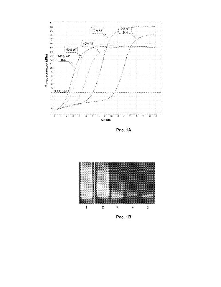 Способ определения активности теломеразы методом двойной амплификации теломерных повторов в реальном времени