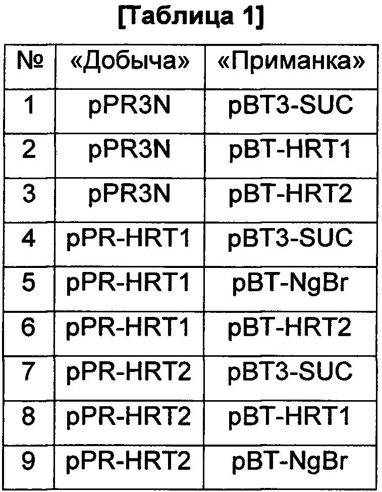 Трансформант для экспрессии цис-пренилтрансферазы и рецептора nogo-b