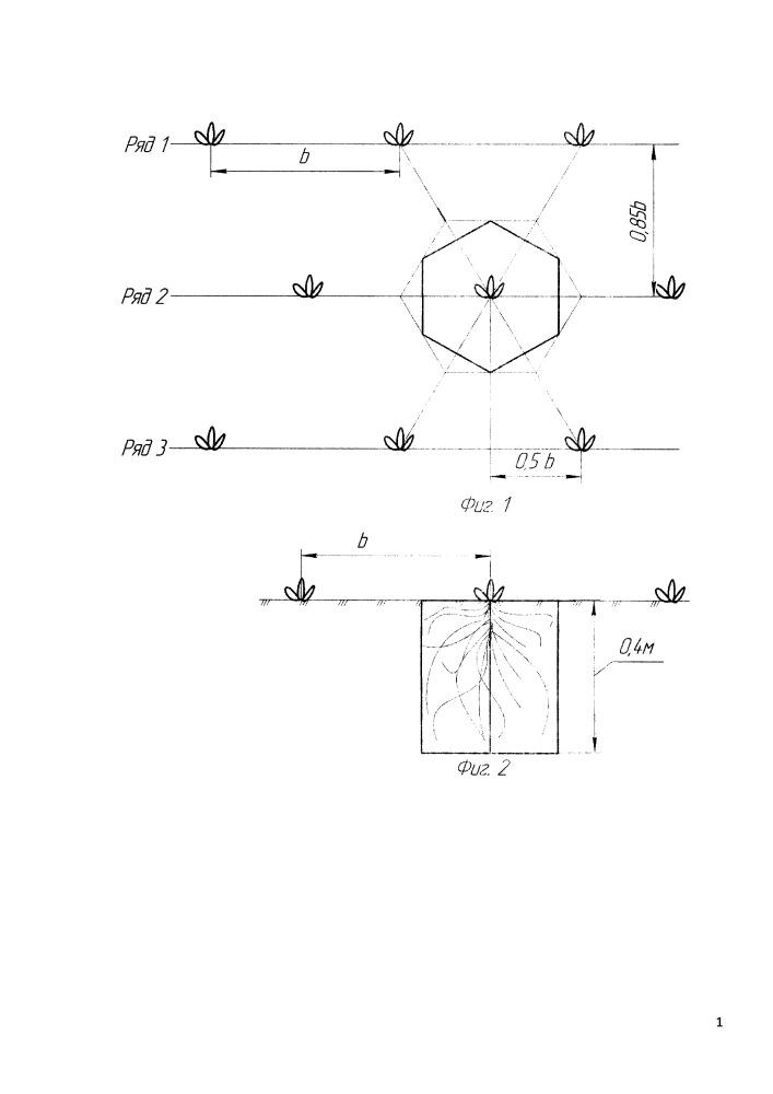 Способ определения размера почвенного питания растений тыквы волжская серая 92