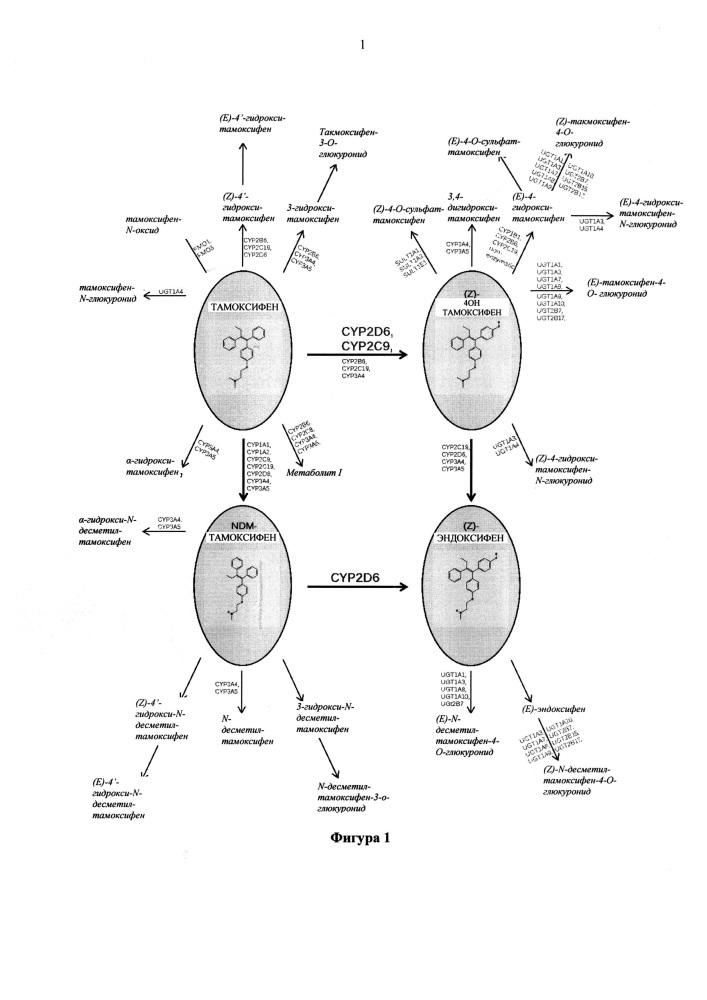 Фармацевтические композиции на основе генотипа или фенотипа