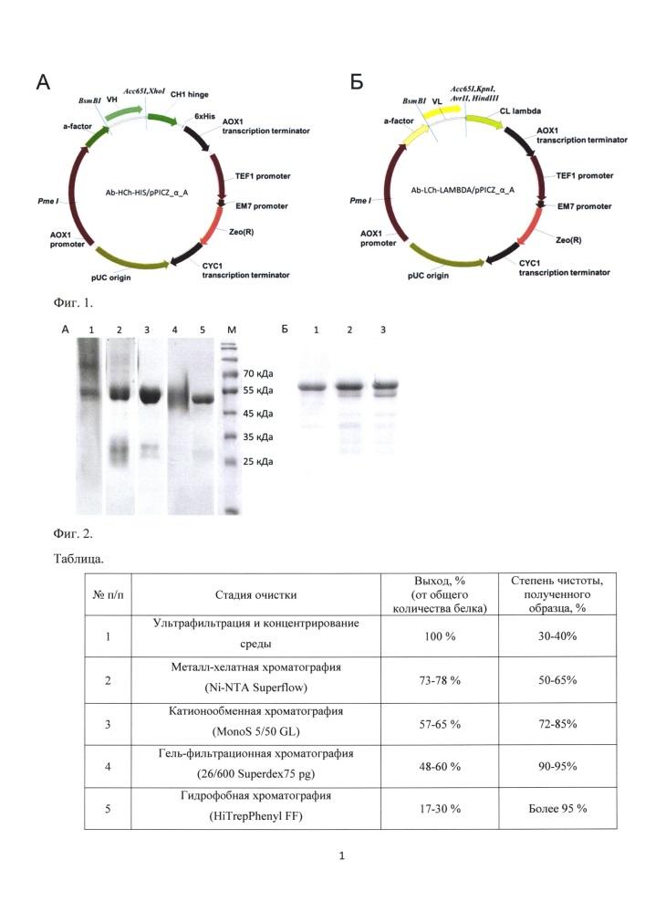 Система для экспрессии fab-фрагментов антител в метилотрофных дрожжах pichiapastoris, на основе рекомбинантных плазмидных днк ab-hch-his/ppicz_α_a и ab-lch-lambda/ppiczα_a, предназначенных для клонирования вариабельных доменов тяжелой и легкой цепей антител, соответственно