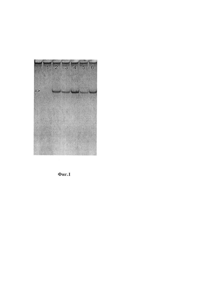 Способ моделирования биоплёнок, формируемых vibrio cholerae 01 серогруппы на поверхности хитина