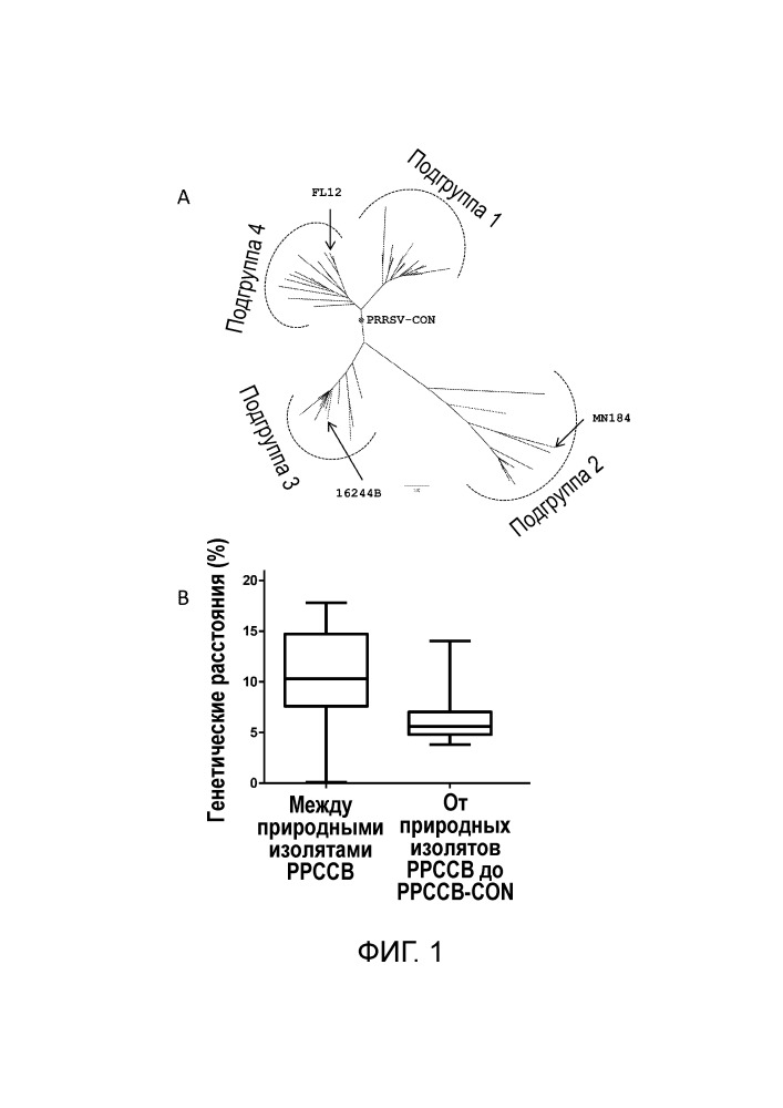 Не встречающийся в природе вирус репродуктивно-респираторного синдрома свиней (bppcc) и способы применения
